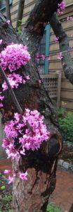 pinkflowertrunkhorse3